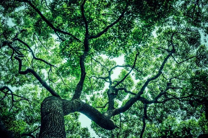 となりの木