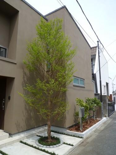 シンボルツリー ヒメシャラ